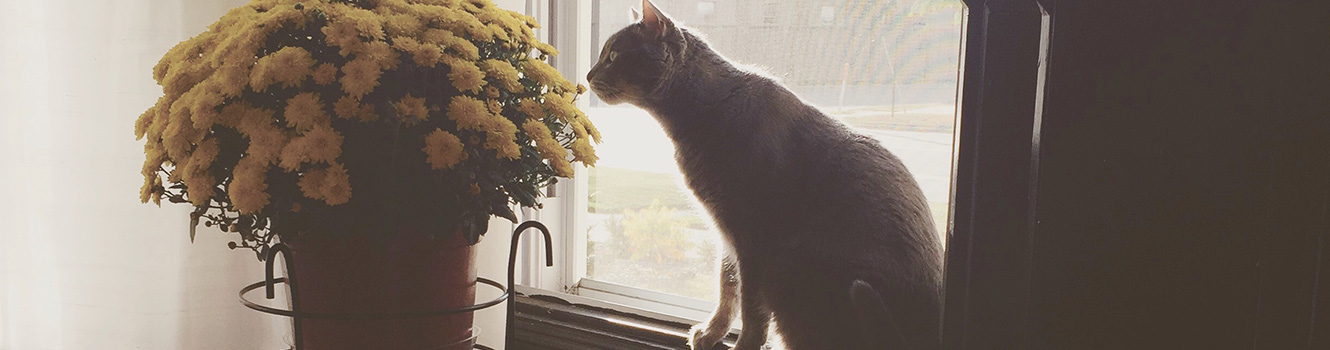 cat smelling mums